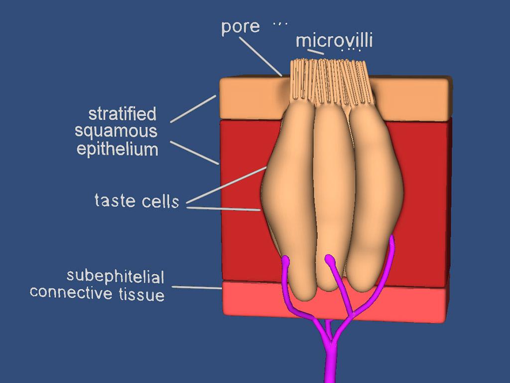 3d Plant Cell Diagram Neuron Nerve Prokaryotic Glavaprerezolf1024x768 5